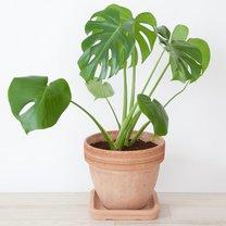 15 Roślin Które Nie Potrzebują światła Porada Tipypl