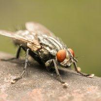 Jak pozbyć się owadów z domu  krok 2