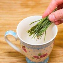 Jak zrobić zdrowotny napój z sosny krok 2