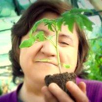 szkodniki na roślinach