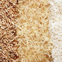 ryz odmiany