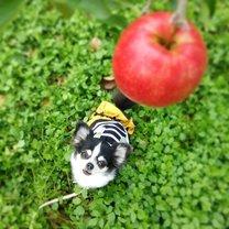 jabłka dla psa