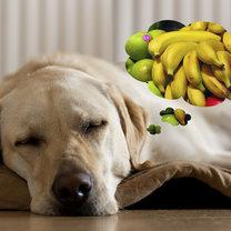 pies jedzenie