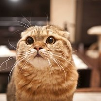 mocz kota