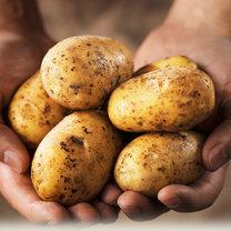 ziemniaki