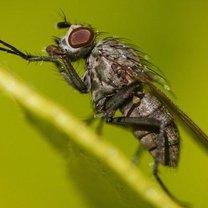 prosta pułapka na muchy