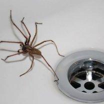 pająk w domu