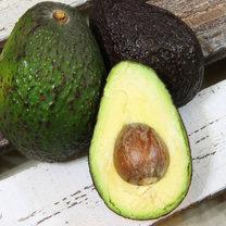 avocado dania