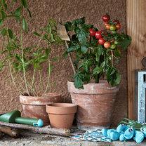 uprawa roslin