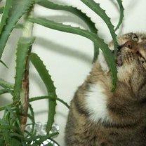 Jak zrobić spray odstraszający koty krok 1