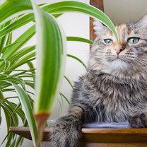 Jak zrobić spray odstraszający koty krok 2