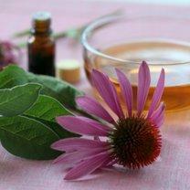 Jak zrobić nalewkę z echinacei na przeziębienie i grypę krok 1