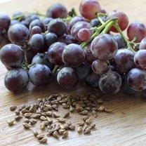 nasiona winogron
