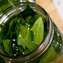 olej laurowy ból stawów