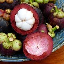 owoc mangostanu