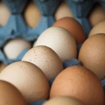świeżość jaj