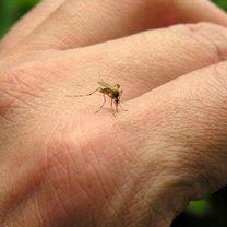 Jak zrobić domowy preparat odstraszający owady krok 1