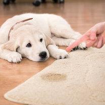 Domowy preparat do czyszczenia dywanów krok 1