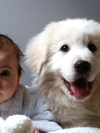 10 Ras Psów Najlepszych Dla Rodziny Porada Tipypl