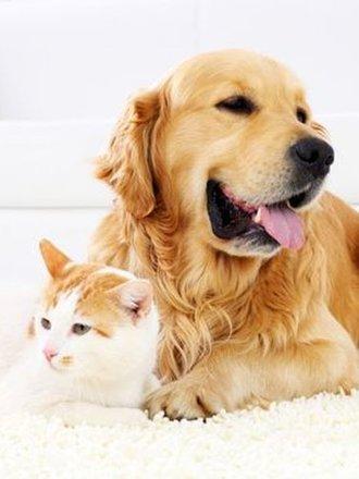 Jak wykorzystać sierść zwierząt
