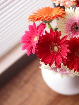 kwiaty na stres