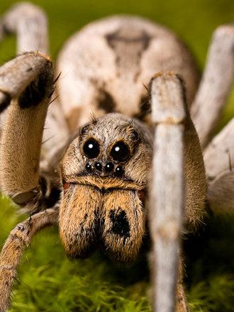 15 niesamowitych faktów o pająkach - Porady w INTERIA.PL
