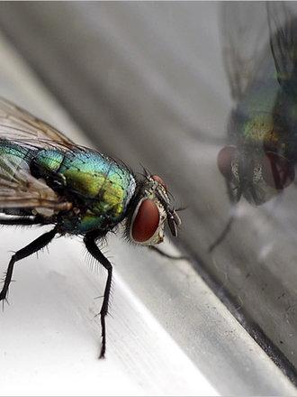 Jak pozbyć się owadów z domu