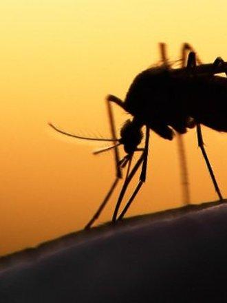 komary odstraszanie
