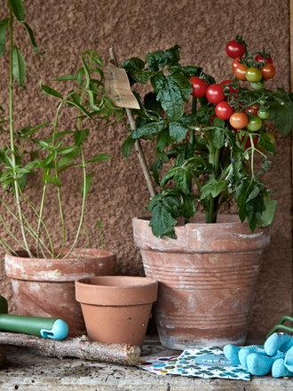8 Roślin Które Możesz Wyhodować W Domu Porada Tipypl