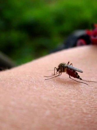 Domowy preparat na komary