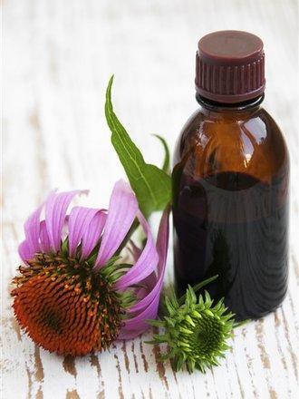Jak zrobić nalewkę z echinacei na przeziębienie i grypę?