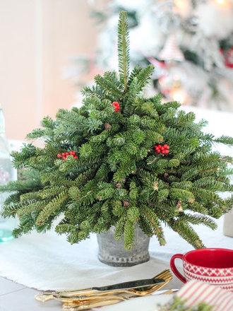 bożonarodzeniowa choinka