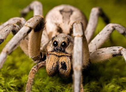15 niesamowitych faktów o pająkach - porady tipy.pl