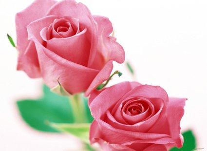 kolorowy cukier z płatków róż