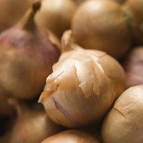 działanie cebuli