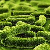 probiotyki nieszczelne jelita