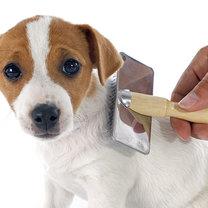 szczotkowanie psa
