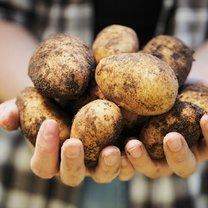 ziemniak na kaszaki