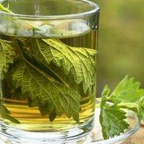herbatka z pokrzyw