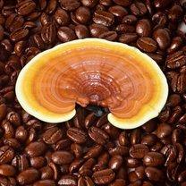kawa grzybowa właściwości