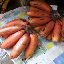 właściwości czerwonych bananów