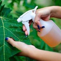 rośliny szkodniki