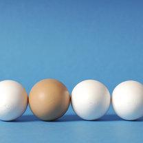 jajka białe czy brązowe
