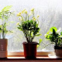 rośliny pomogą ci zasnąć