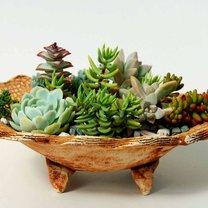 miniaturowy ogród