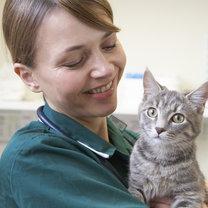 kot wizyta u weterynarza