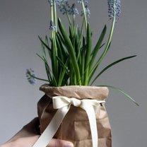 prezenty rośliny