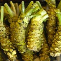 Wasabi (łac. Wasabia japonica, Eutrema japonica) to przyprawa pochodząca z Japonii. Najbardziej znane...