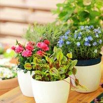 Rośliny doniczkowe są jedną z naszych ulubionych ozdób. Nie tylko stanowią efektowną dekorację...