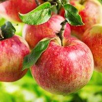 Jabłko to prawdziwa witaminowa bomba i doskonałe źródło minerałów oraz wyjątkowo cennego błonnika...